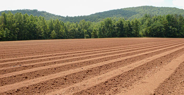 A ploughed field on a sunny day.